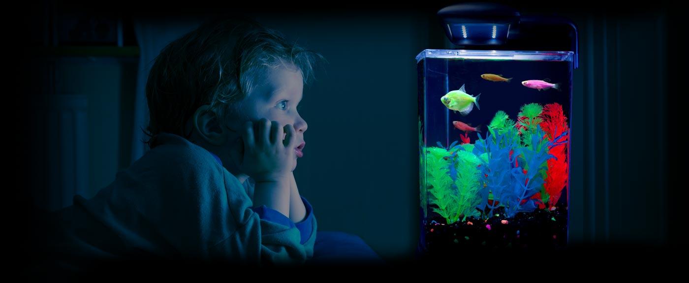 аквариум глофиш