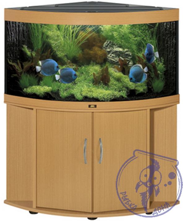 350 лет аквариуму: